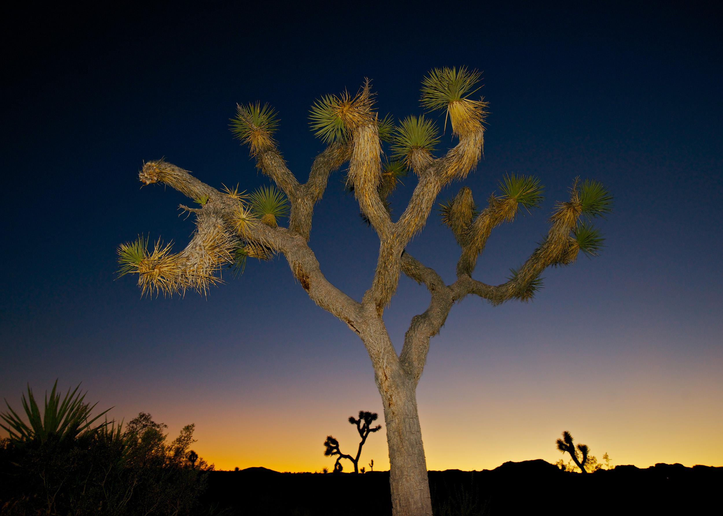 Joshua Tree National Park, CA, USA