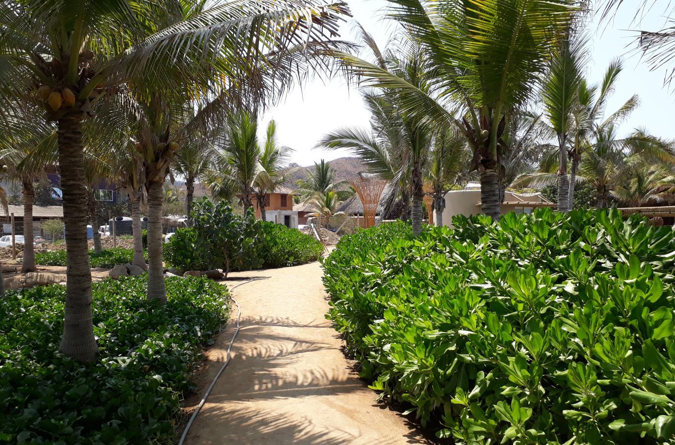 Welcome to Punta Majahua