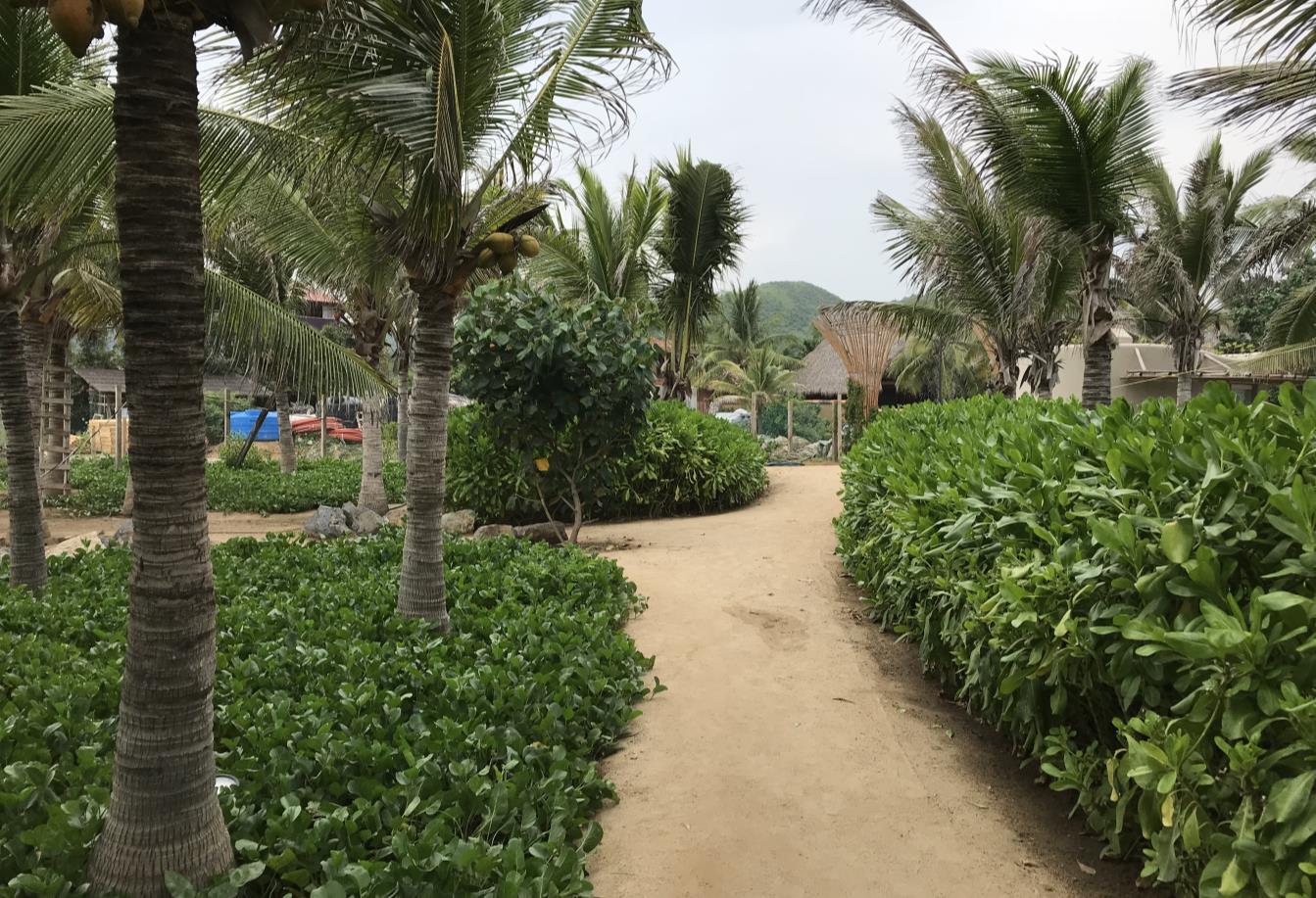 Punta Majahua | Landscape