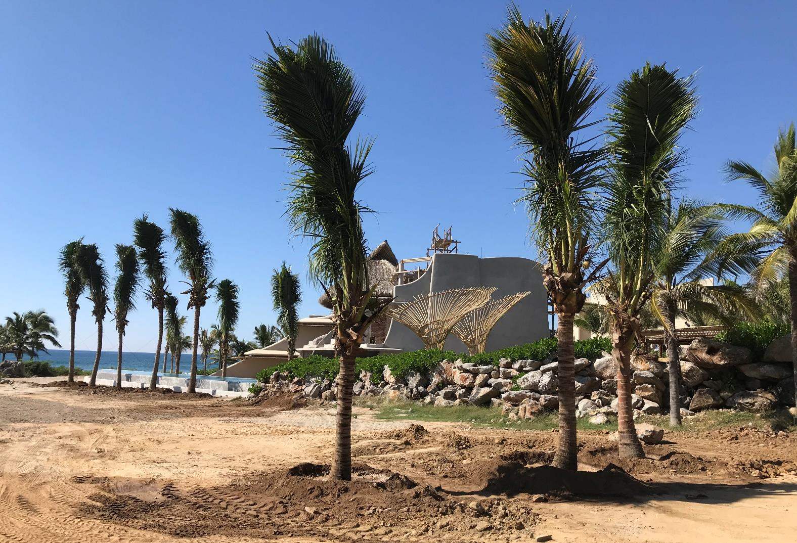 New Palm Trees | Beach Club Area