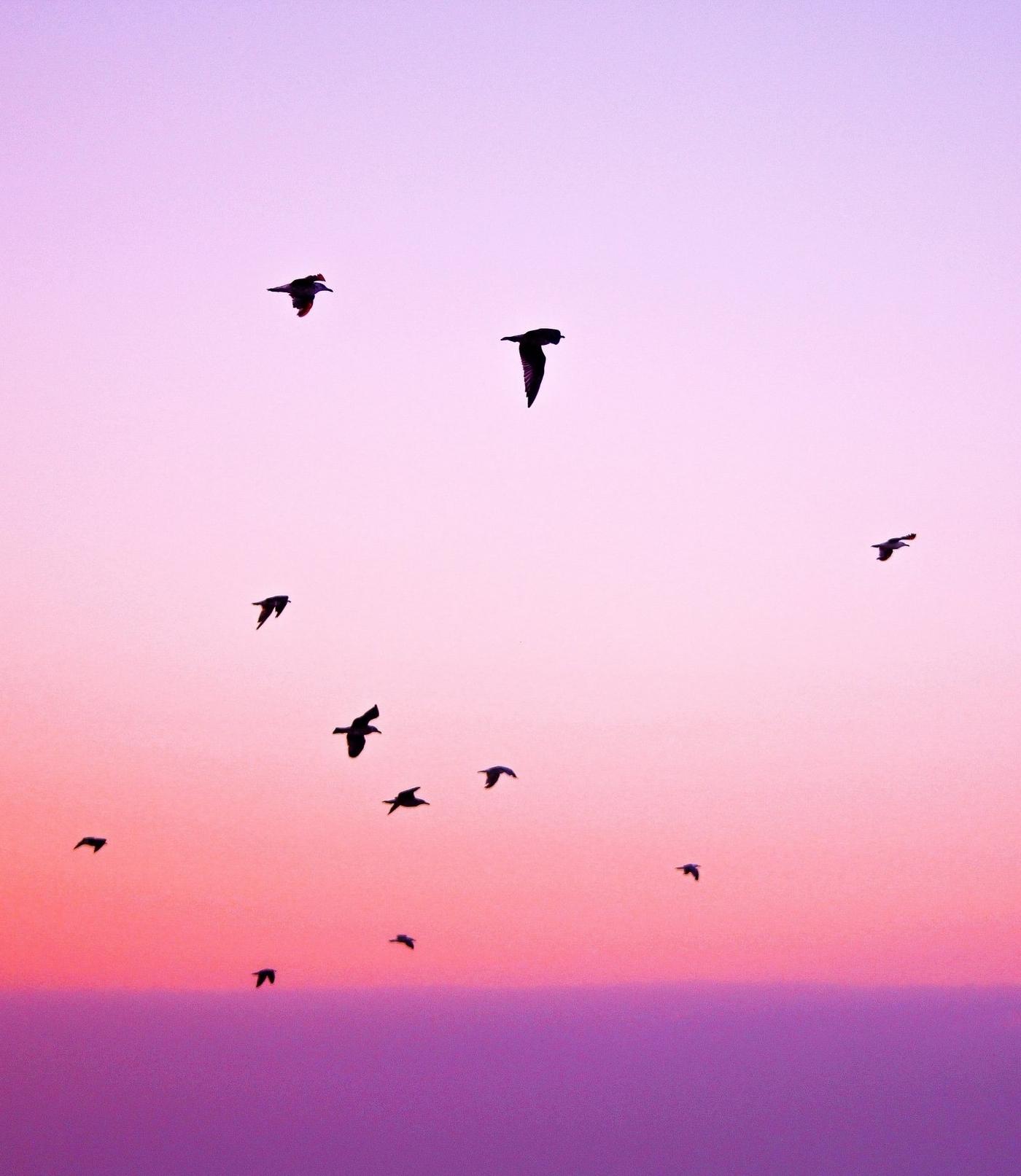animals-birds-nature-21261.jpg