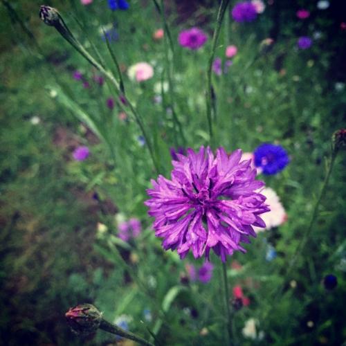 gardenflowers1.JPG