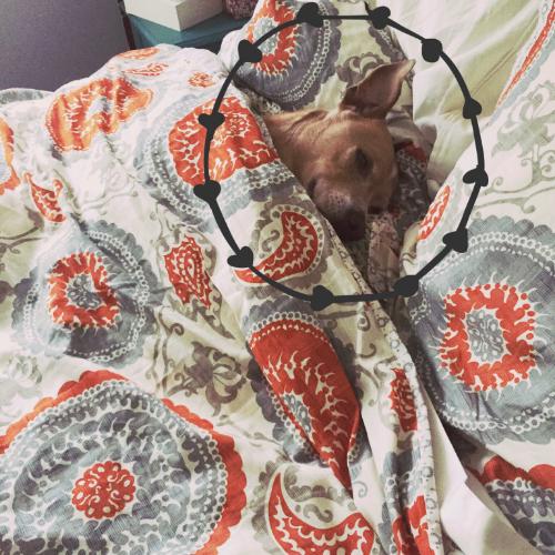 Lazy Sundays for all!