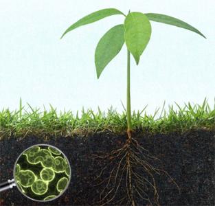 SoilMicrobes.jpg