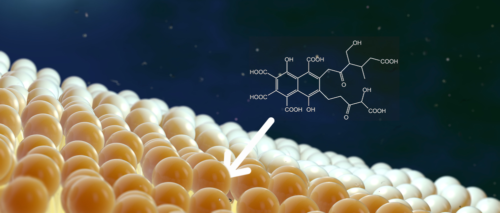 Fulvic acids are small enough to pass through cell membranes, carrying with them valuable micronutrients into the plant.