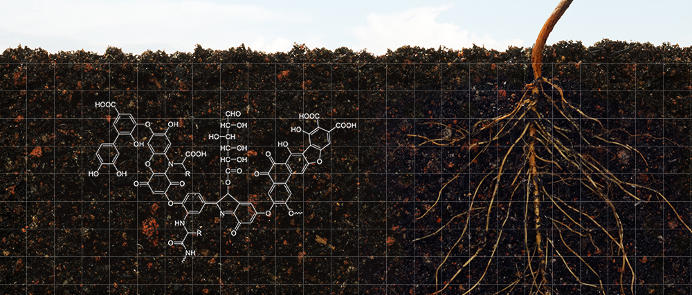 Humic acids help to create a healthy soil environment by improving soil structure and function. This in turn leads to better microbial activity, better water retention, and the more effective transfer of nutrients to the plant