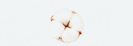 Cottonpic.jpg