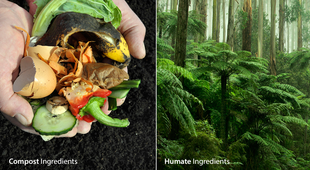 Compost is composed of fresh, decaying organic matter. On the other hand, humate sources are composed of the plant remains of entire ancient forests. Humate is far richer in humus, humic acids, and carbon, and the age of humate allows its material to fully decay into a stable state.