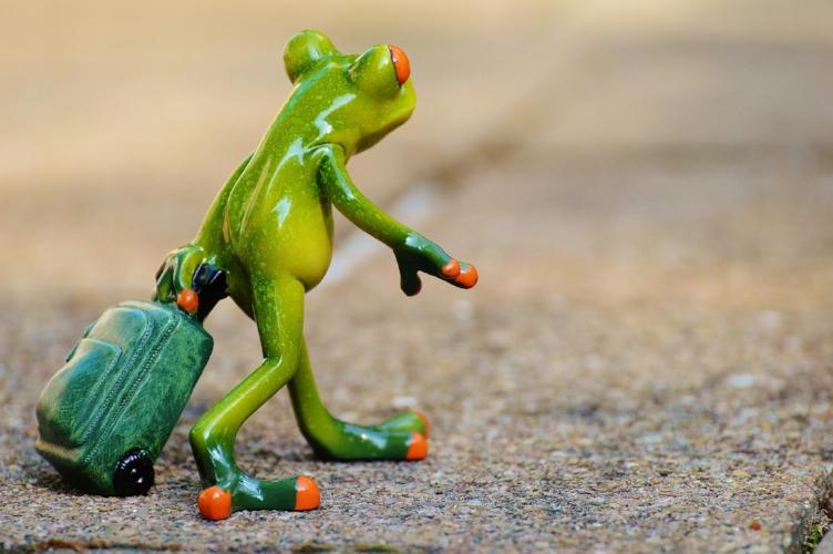 frog-897419_1920.jpg