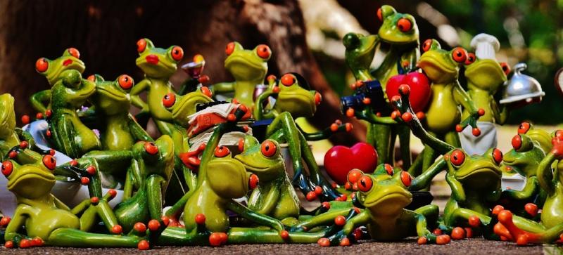 frogs-1364215_1920.jpg
