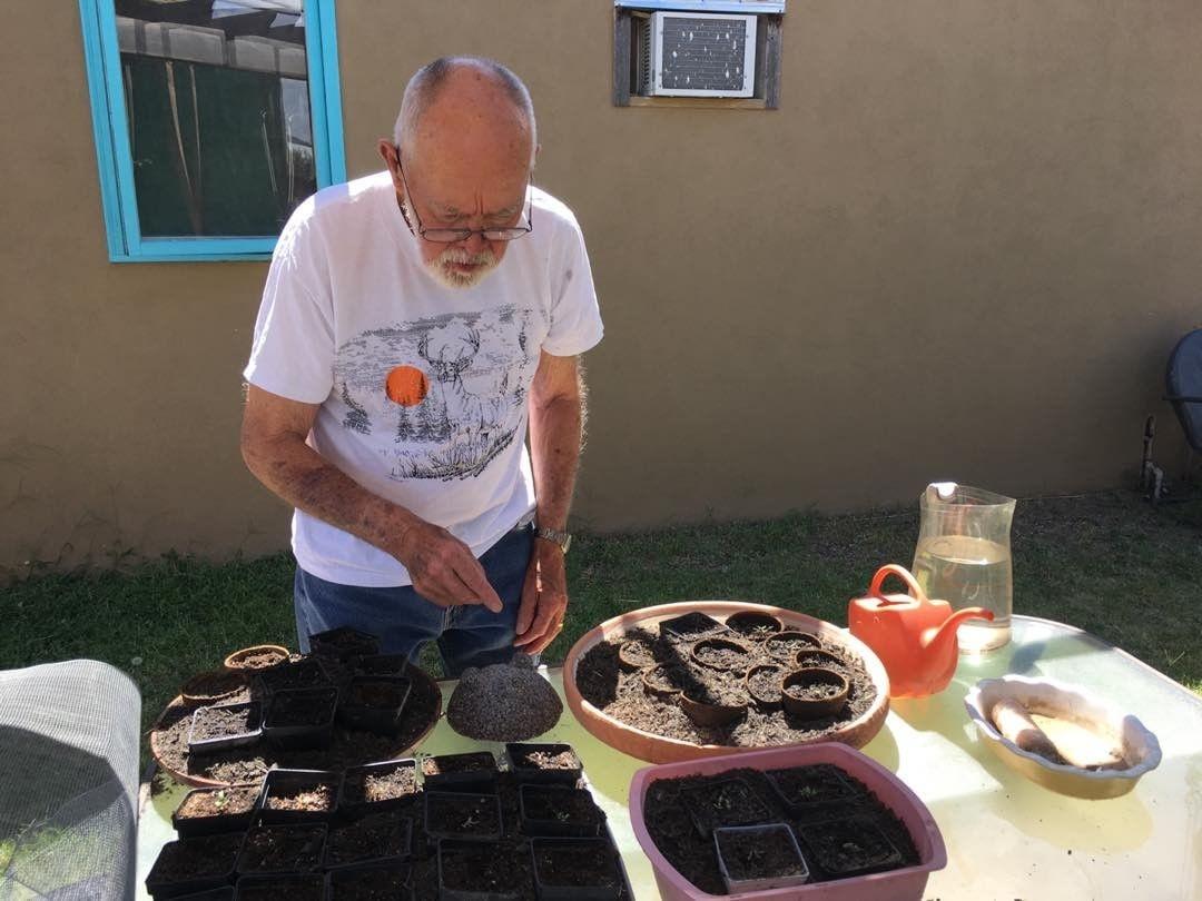planting the organic chard