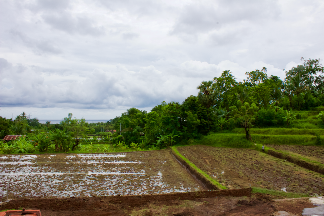 Muddy Rice Terraces
