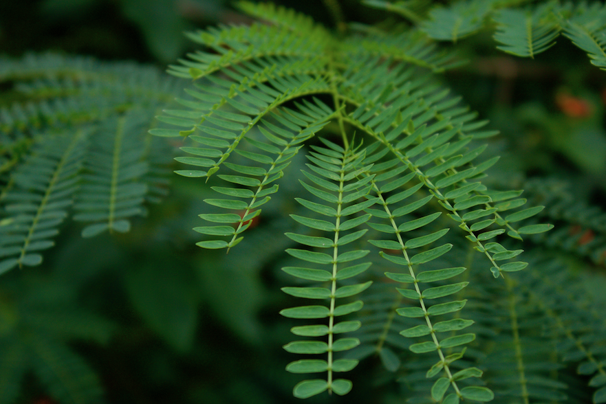 Verdant Plant Life