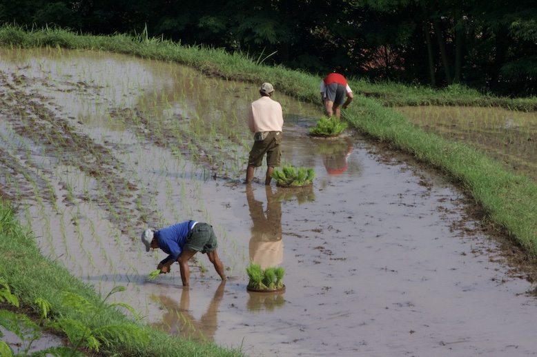 farmers-planting-rice-in-bali.JPG