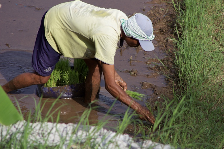 close-up-of-balinese-man-planting-rice.JPG