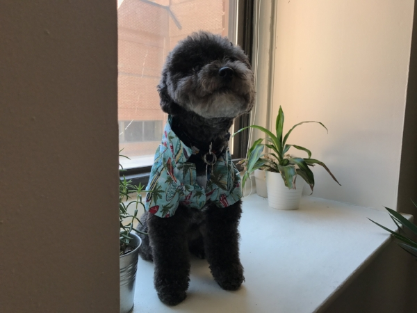 Poodell, The Poodle, as discussed at the end of the interview with Taylor!
