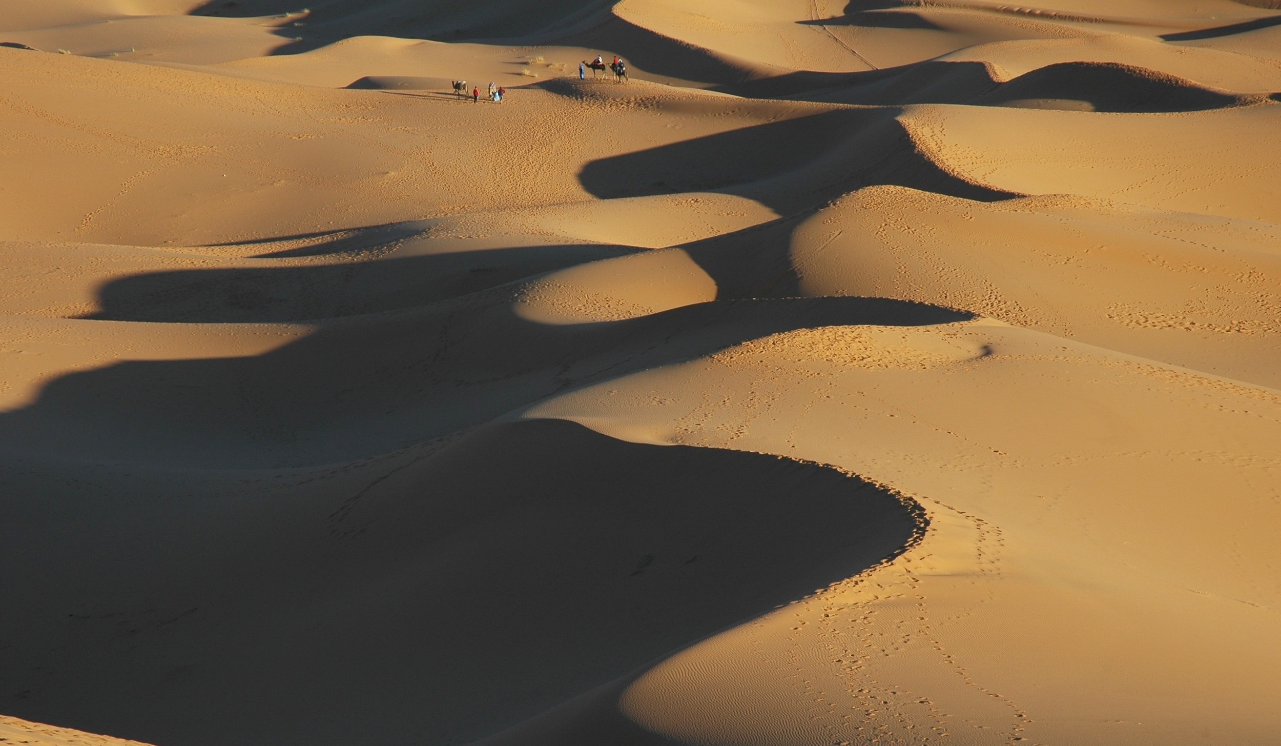 Exploring on camels in the great Sahara desert Morocco
