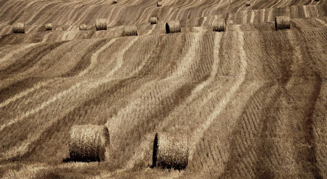 Hale bales on a farm on Hwy 400. That time of year!