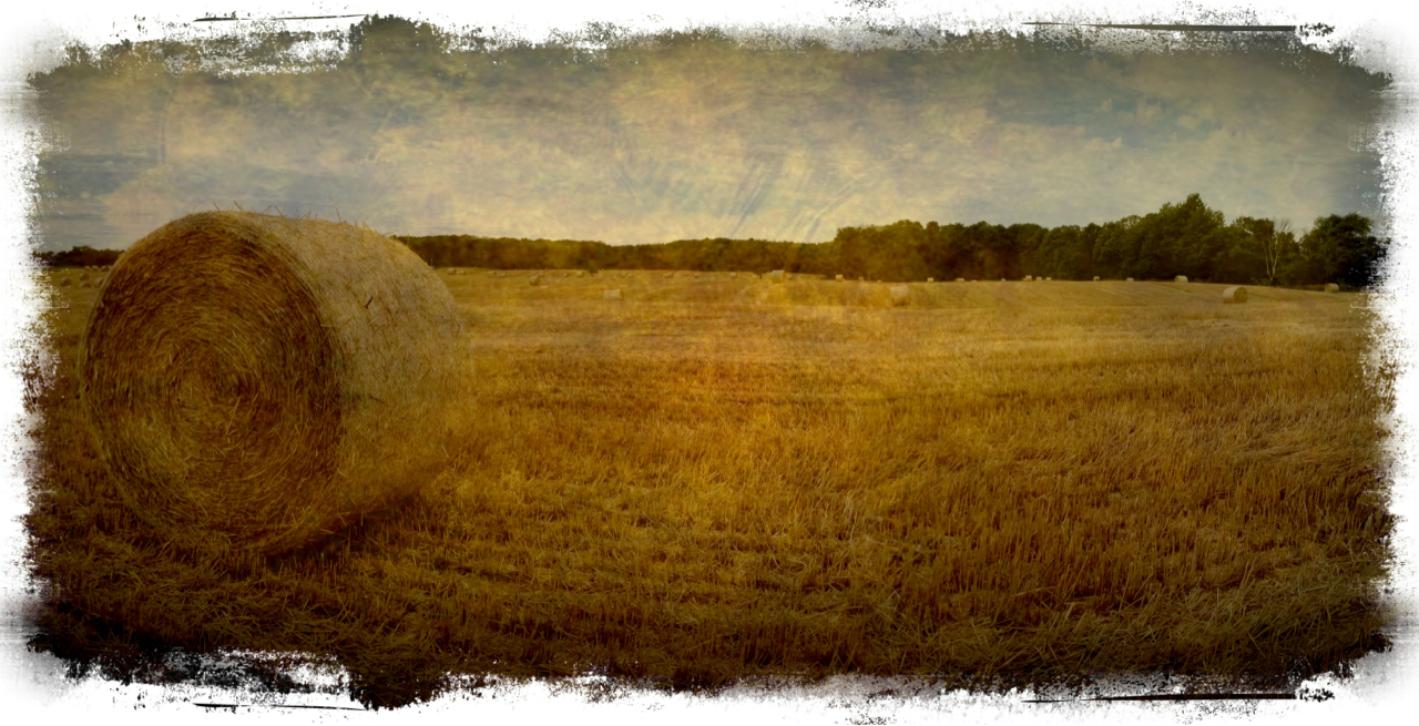 Hay bale near line 21 and Highway 27.  Shot this one with the Pano app & edited with Photoforge.