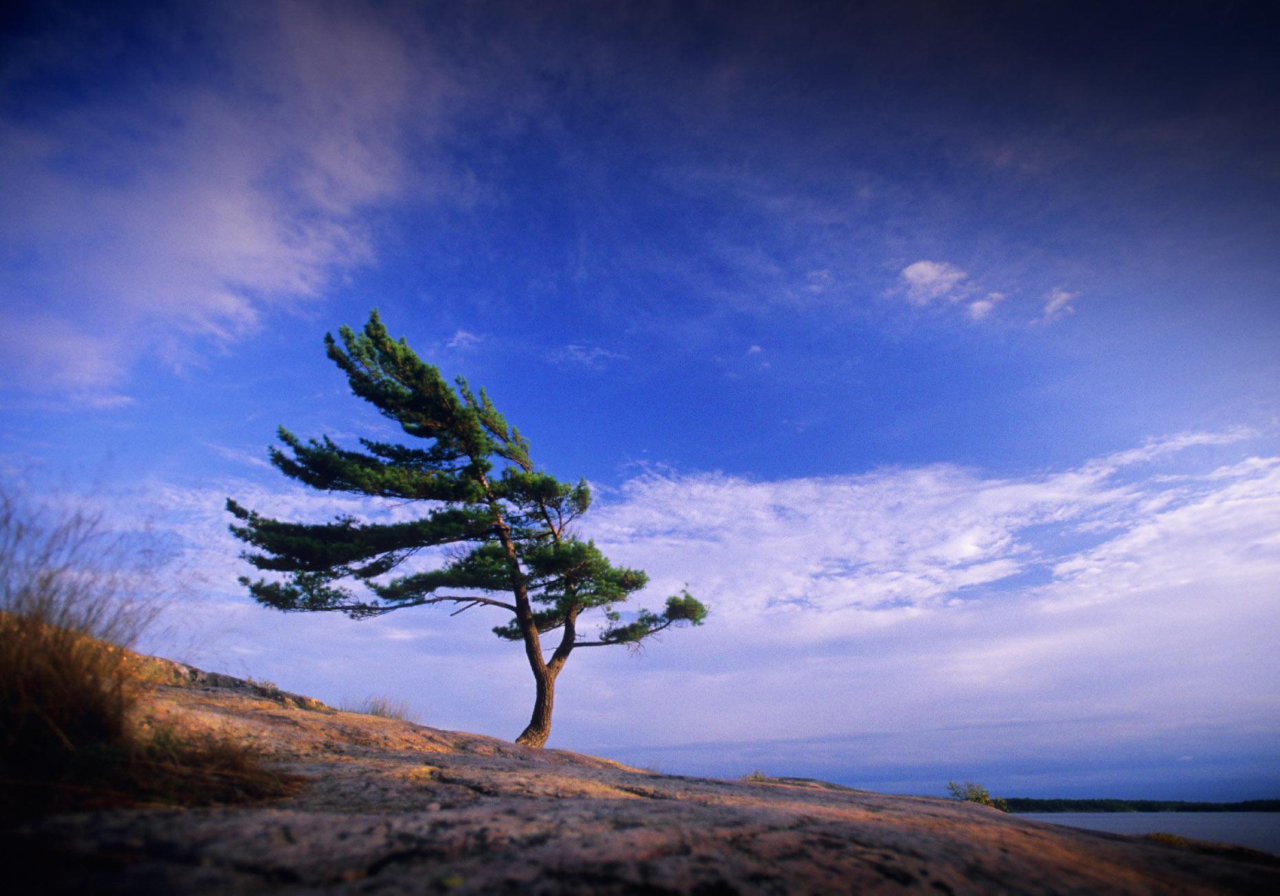 last_test_pine_tree_web.jpg
