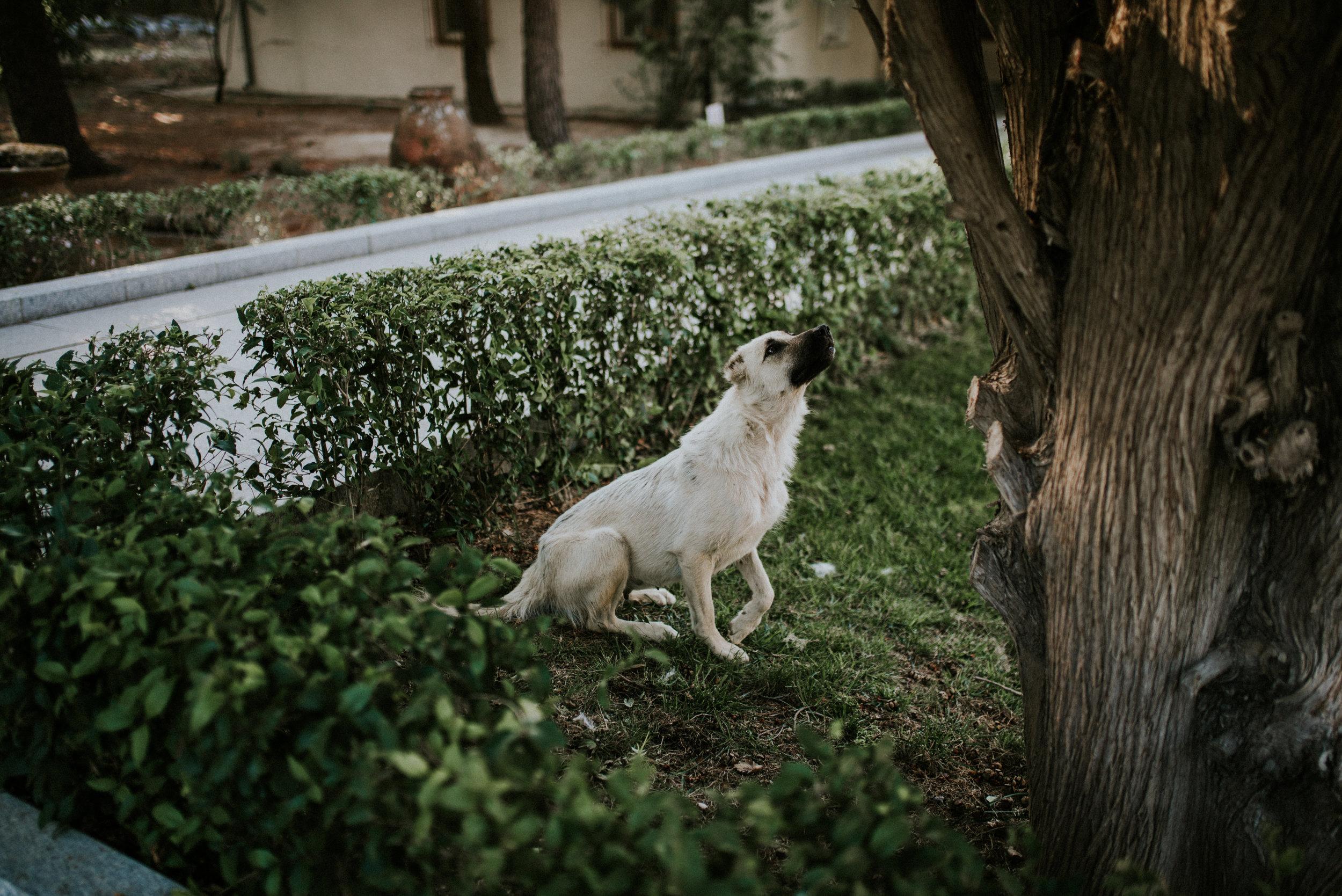 TurkeyTrip-Rachel-Watters-Photo3.jpg