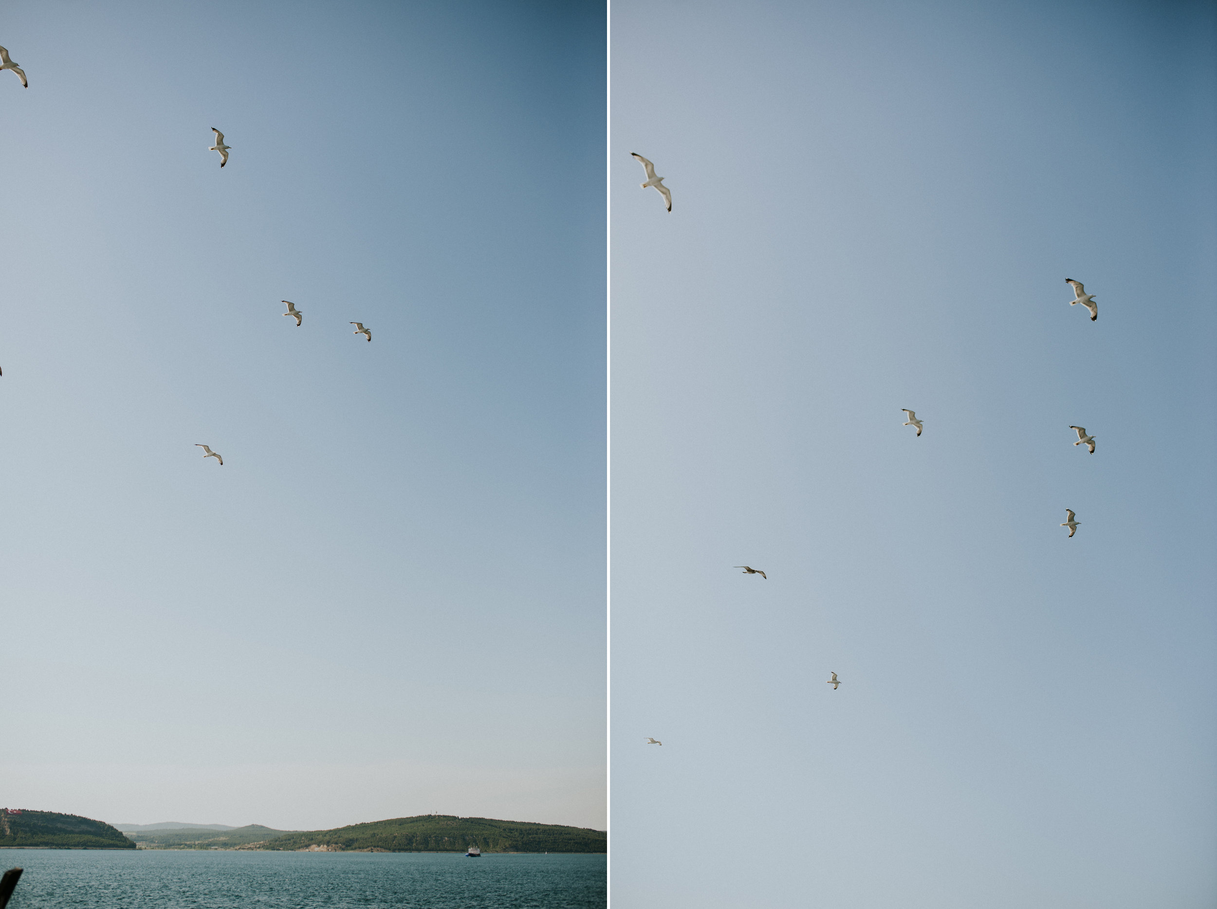 birds-istanbul-1.jpg