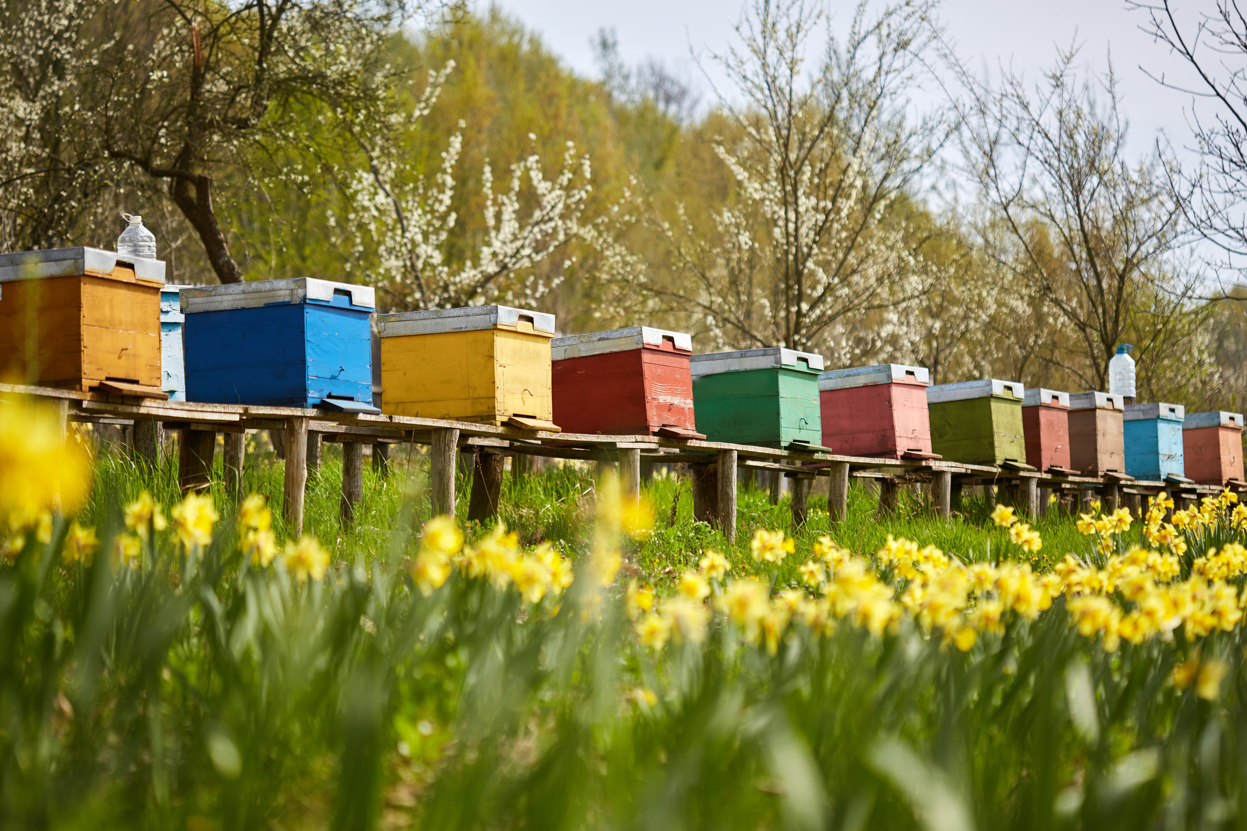 We rely on the work of bee-keepers for a large proportion of our food.