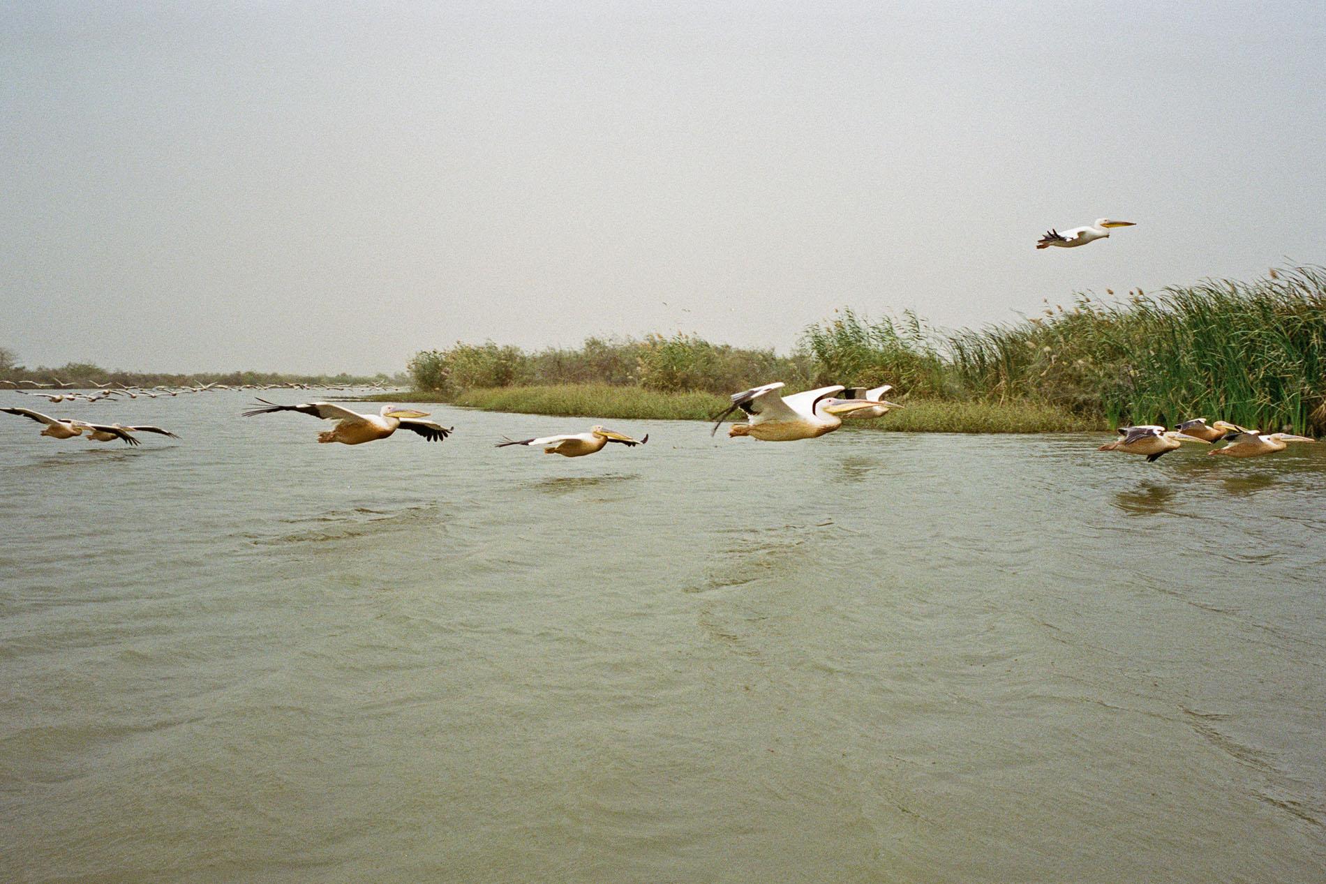 1 lac-de-guiers-pelicans.jpg