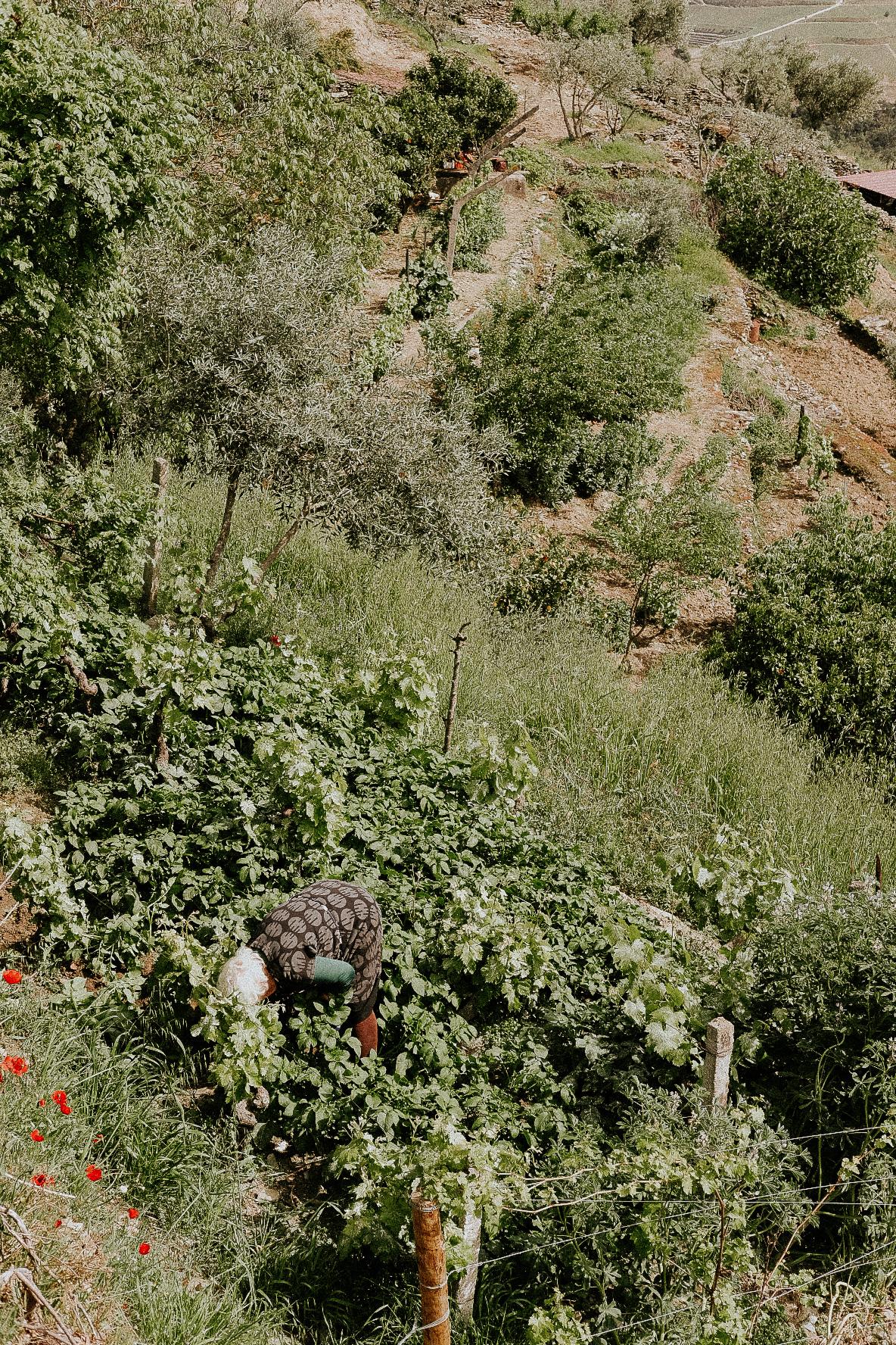 valle del duero miradouros pinhao
