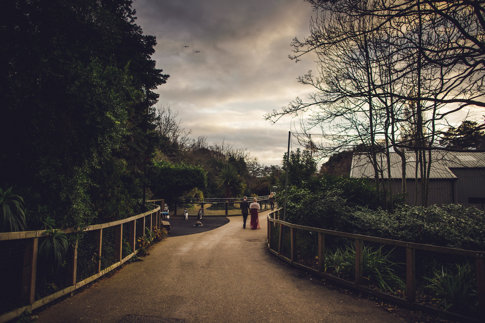 Roger_kenny-wedding-photographer-wicklow-dublin-zoo_136.jpg