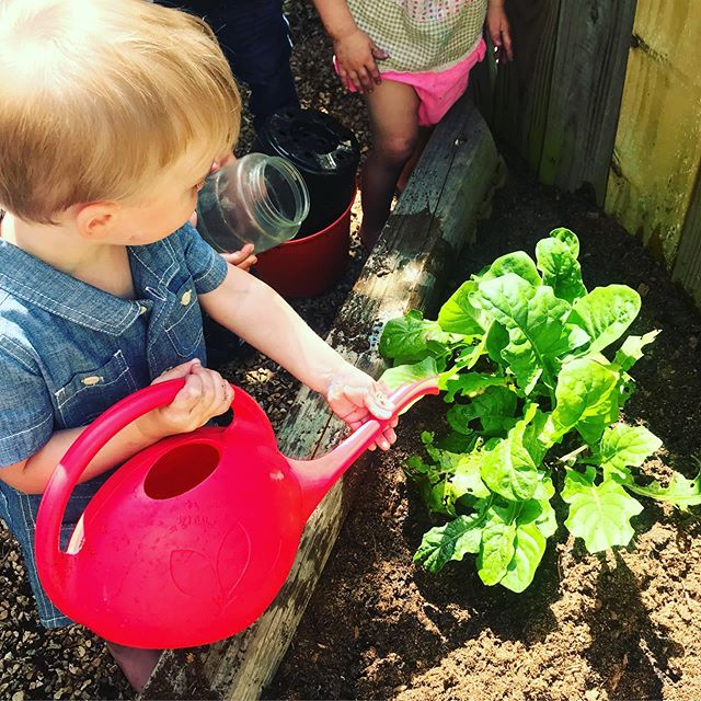 Children who grow what they eat, will often eat what they grow. We have berries, apples, pears, tomatoes and herbs galore growing at school. What are you growing at home?
