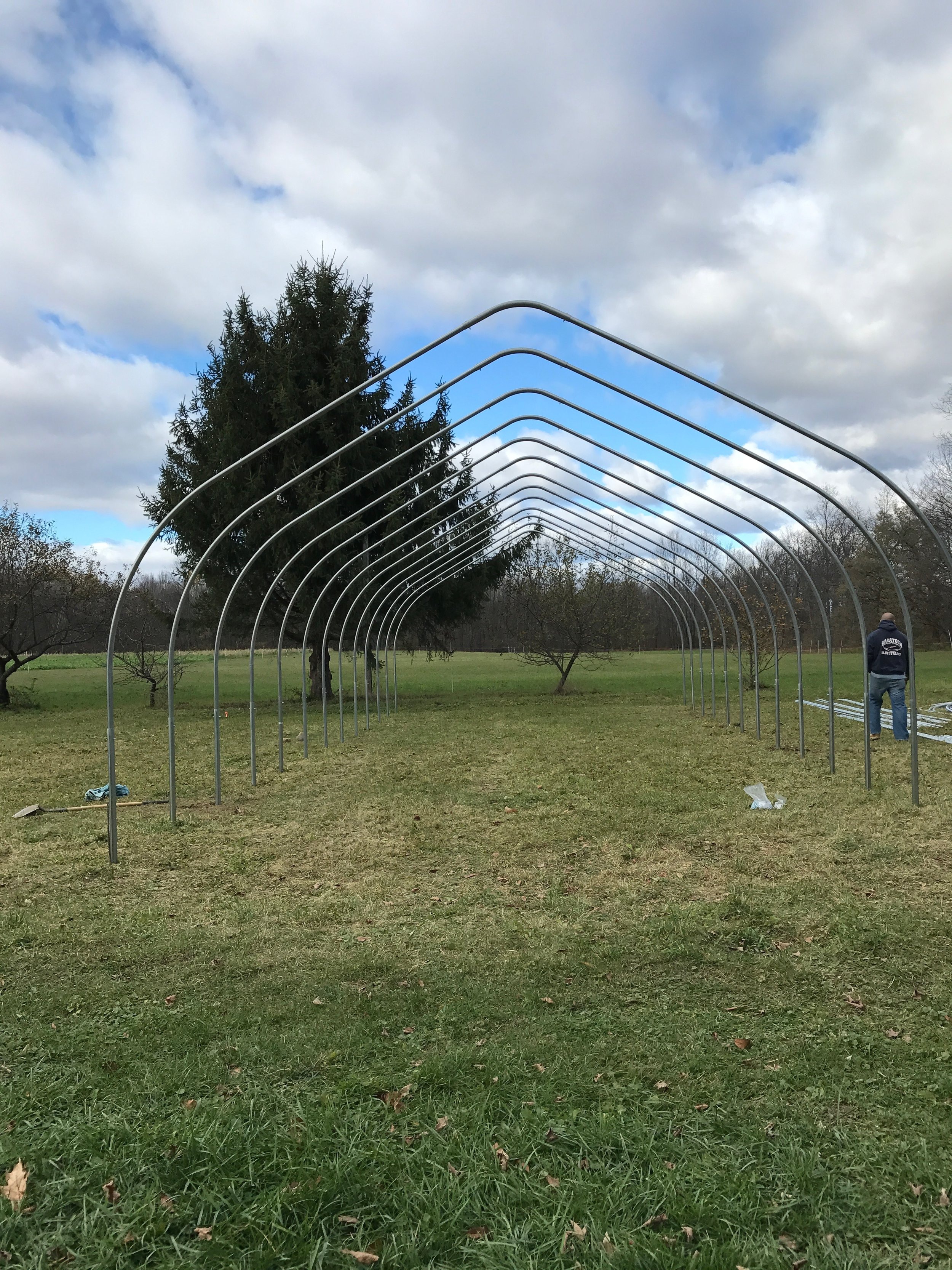 Putting up the first of the two new greenhouses/hoop houses