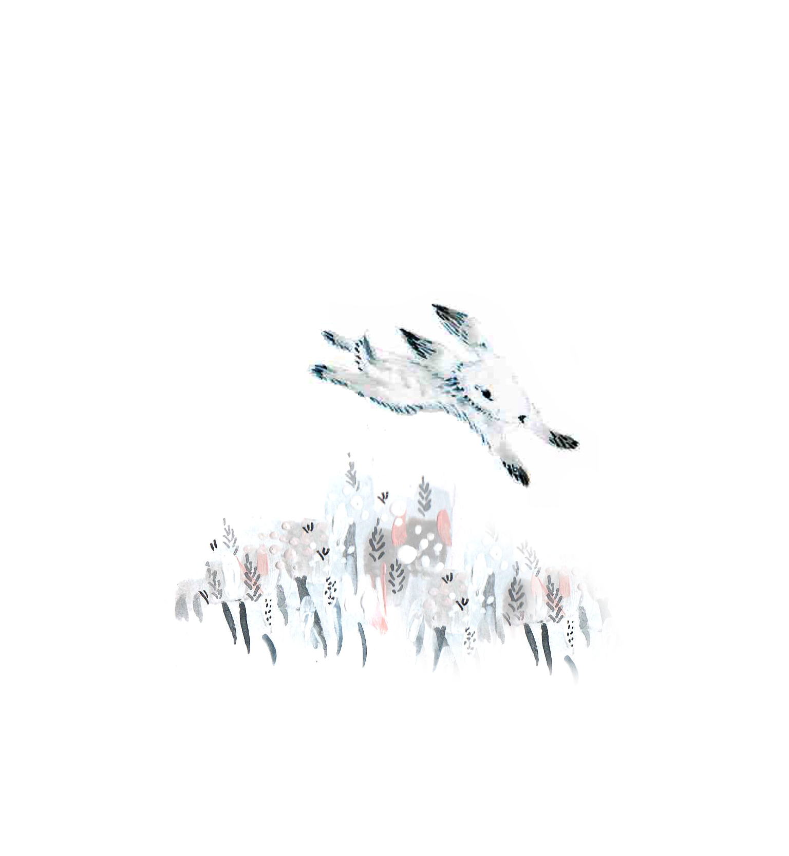 Rabbit website.jpg