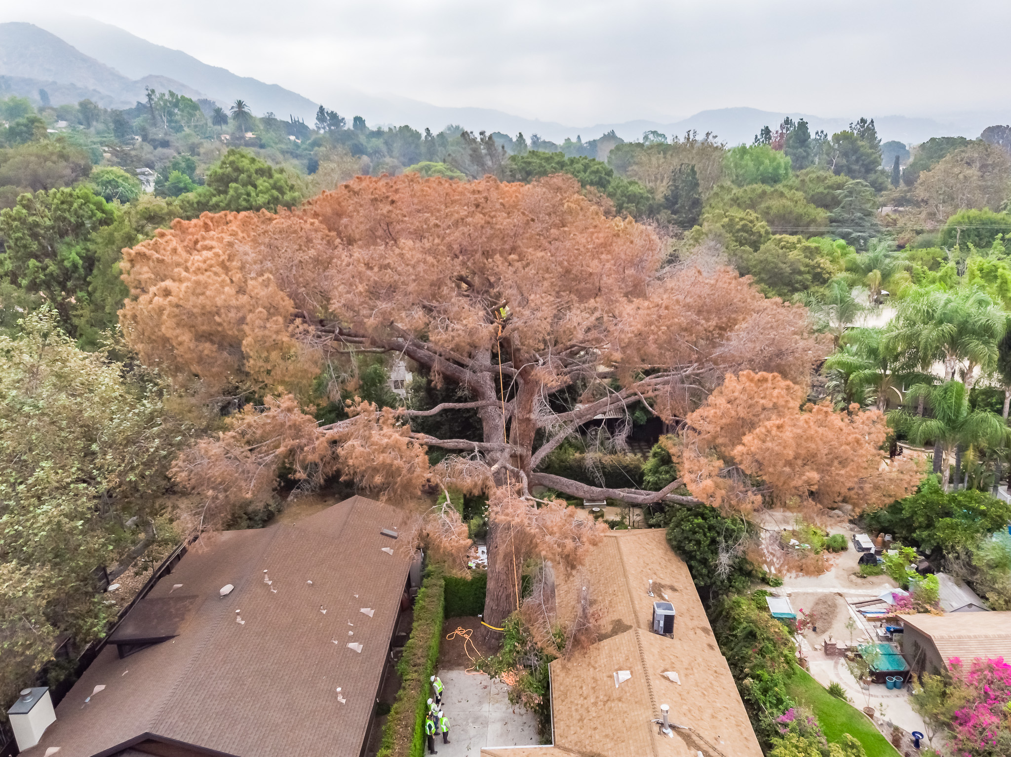 Mariposa Tree Removal Aerial 1-2.jpg