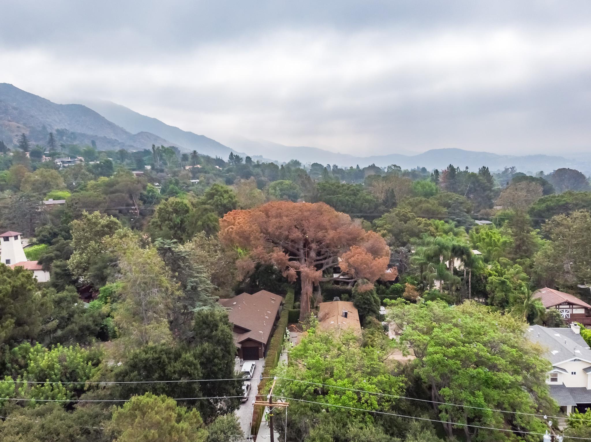 Mariposa Tree Removal Aerial 1-3.jpg
