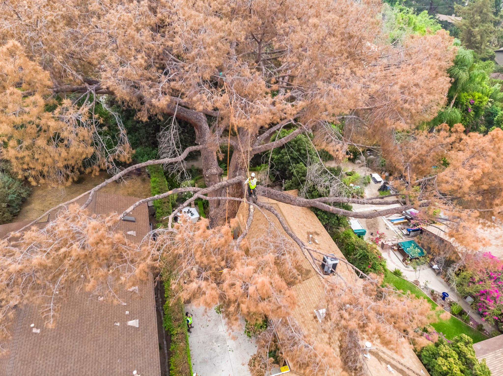 Mariposa Tree Removal Aerial 1-5.jpg