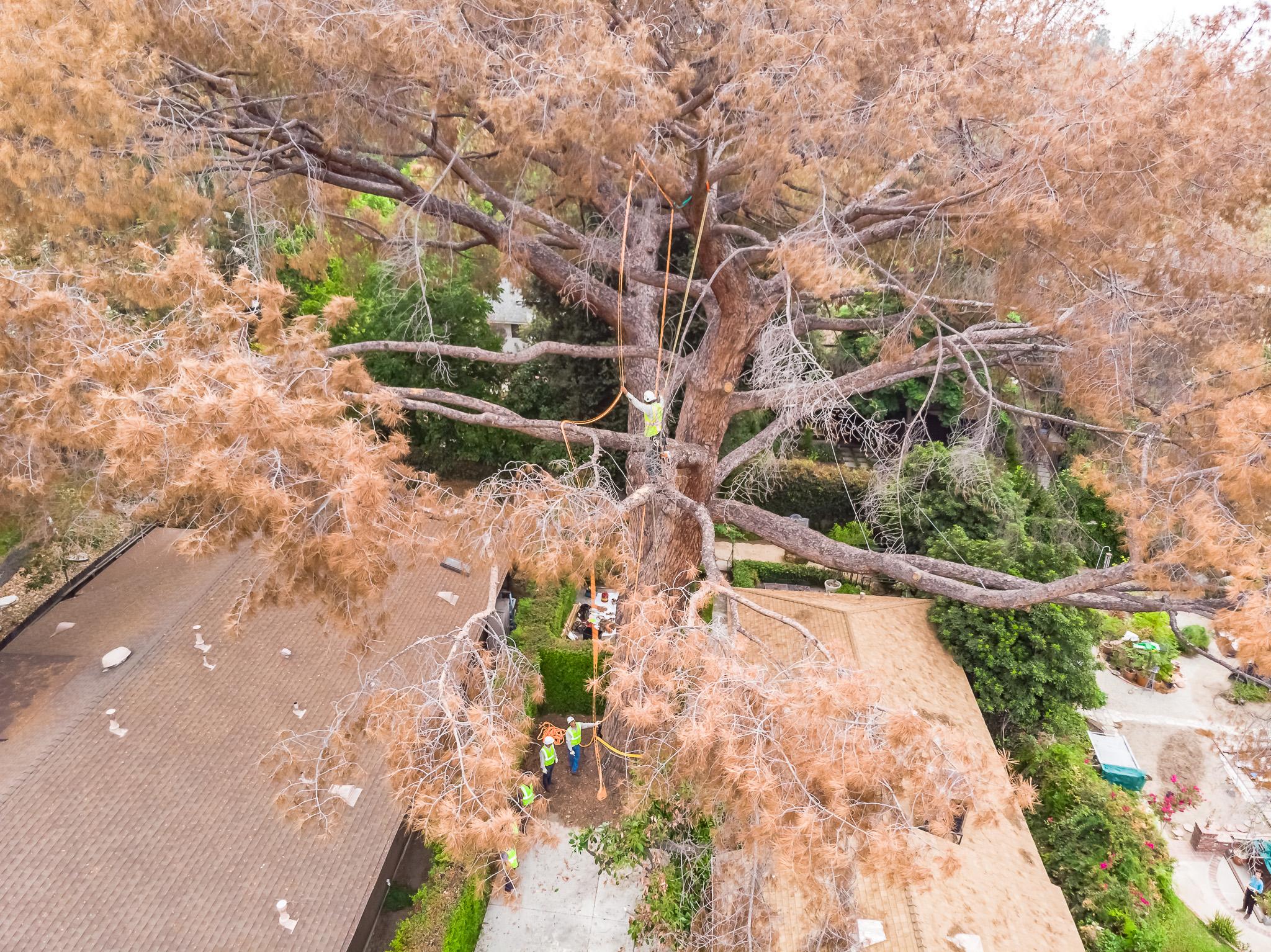 Mariposa Tree Removal Aerial 1-6.jpg