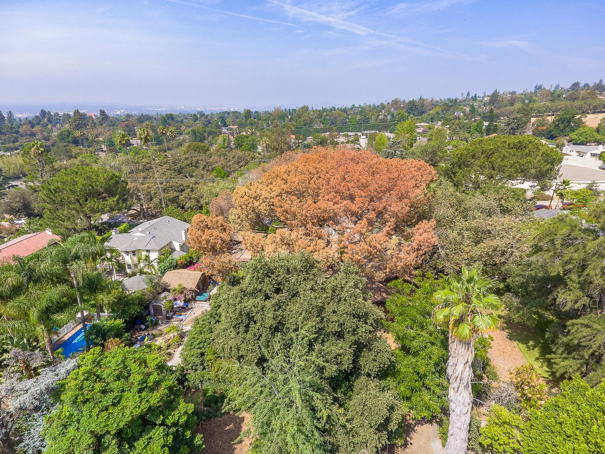 Mariposa Tree Removal Aerial 2-5.jpg