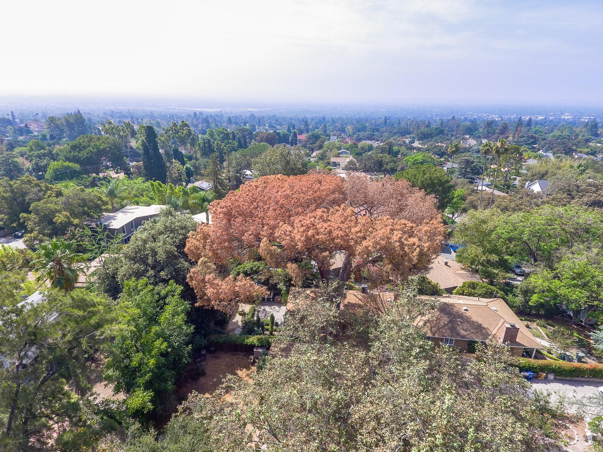 Mariposa Tree Removal Aerial 2-7.jpg