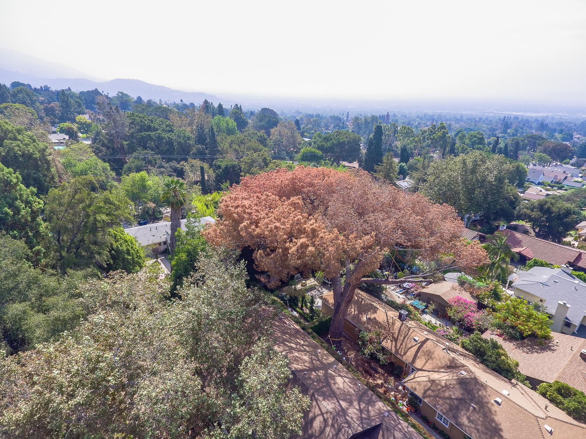 Mariposa Tree Removal Aerial 2-8.jpg