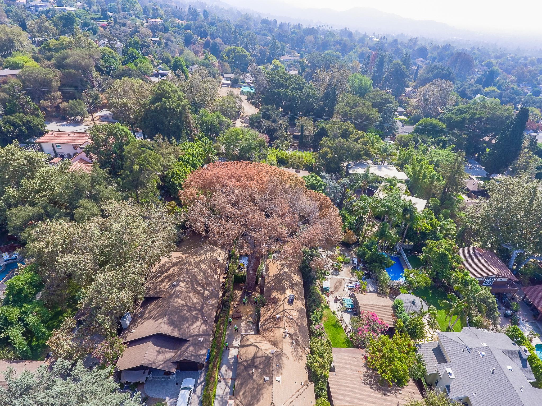 Mariposa Tree Removal Aerial 2-9.jpg