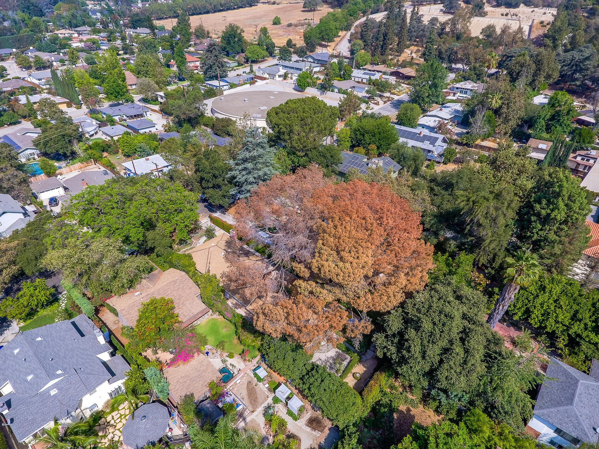 Mariposa Tree Removal Aerial 2-12.jpg