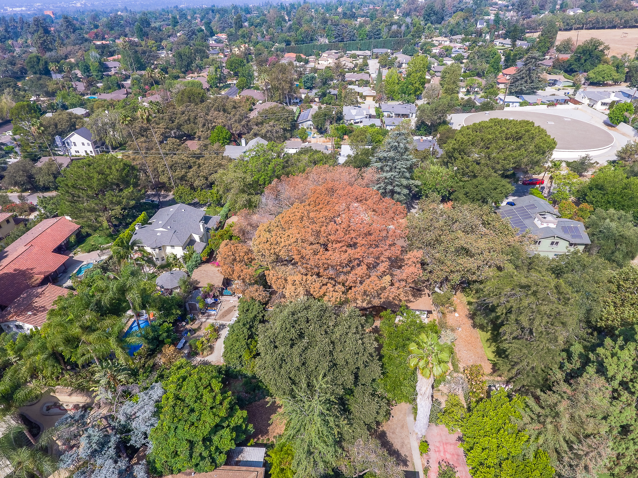 Mariposa Tree Removal Aerial 2-13.jpg