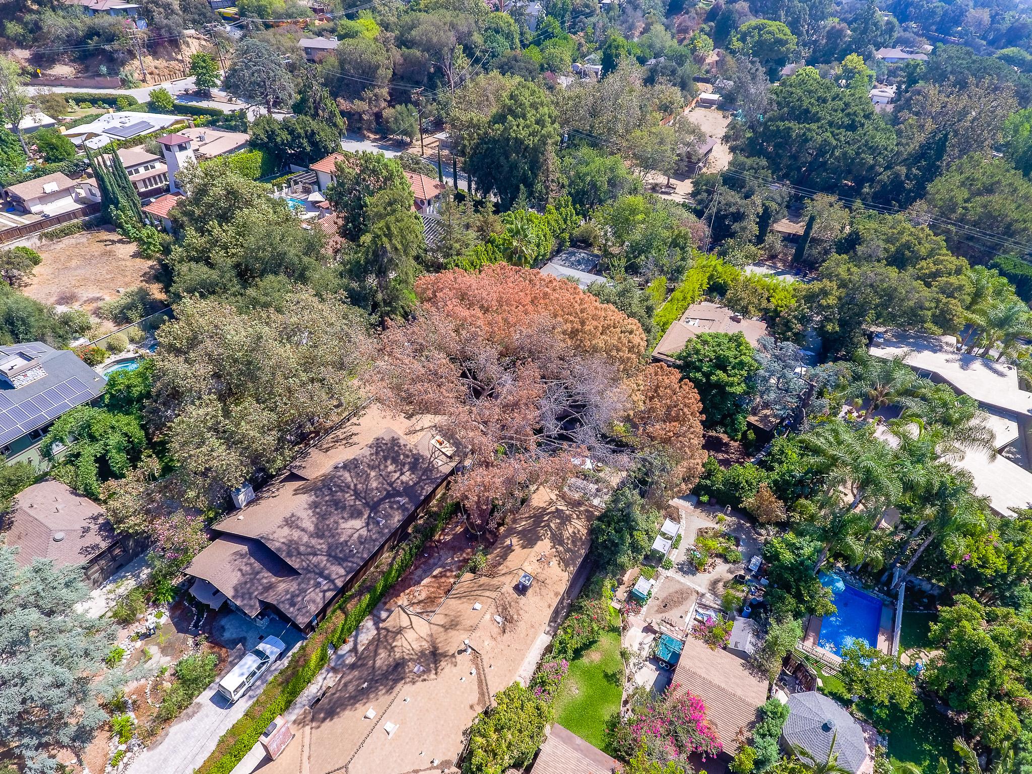 Mariposa Tree Removal Aerial 2-18.jpg