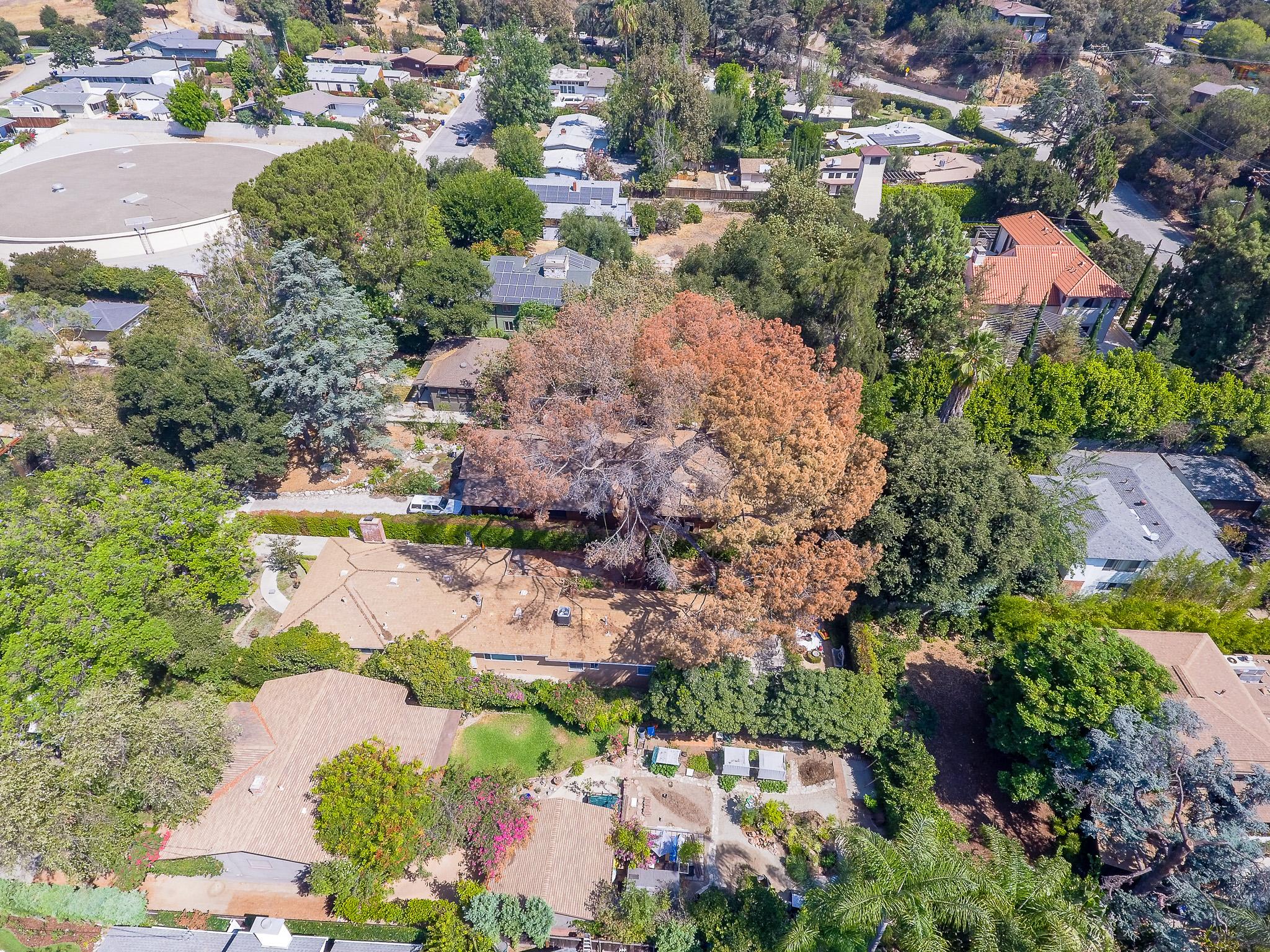 Mariposa Tree Removal Aerial 2-19.jpg