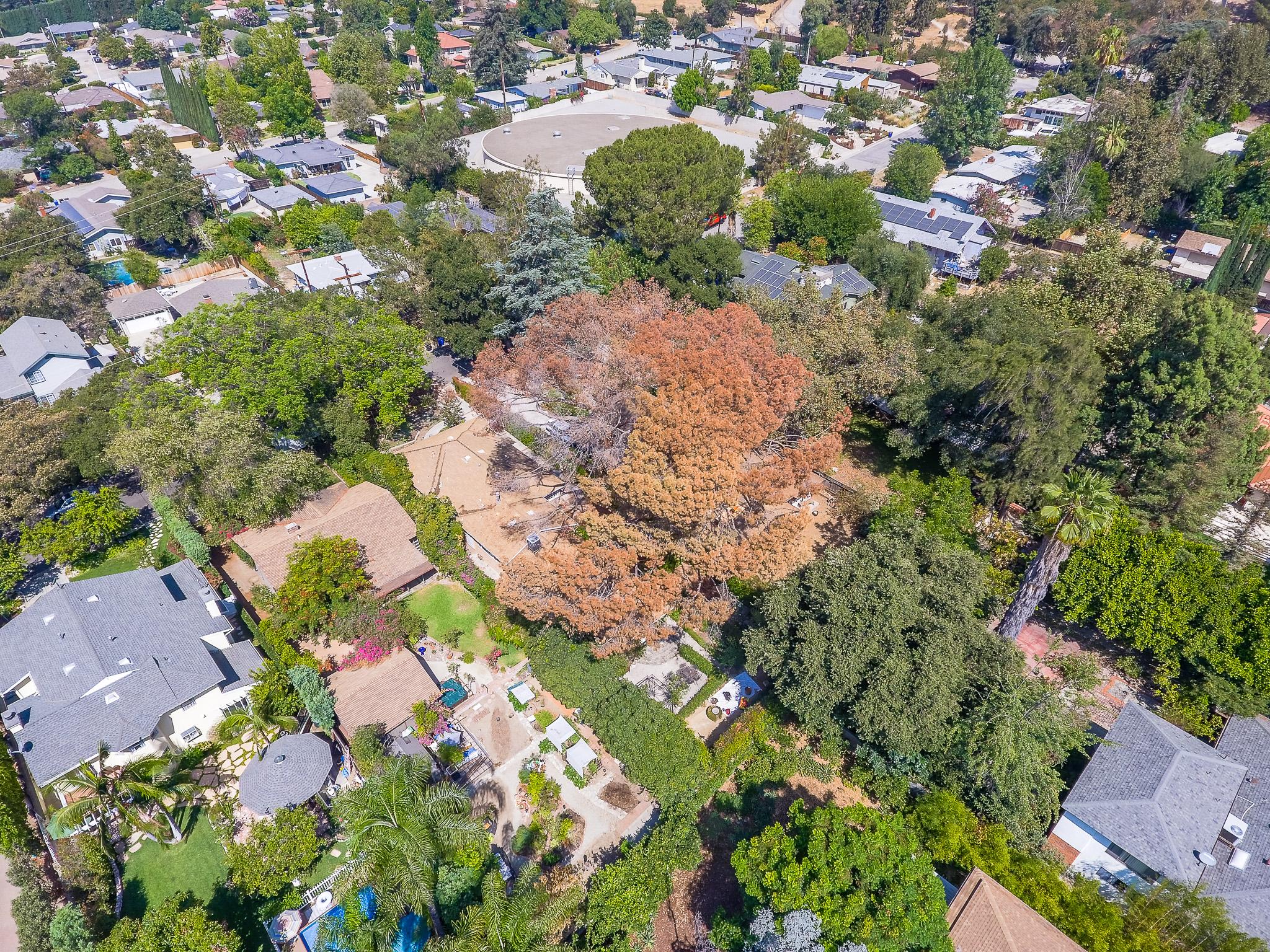 Mariposa Tree Removal Aerial 2-20.jpg