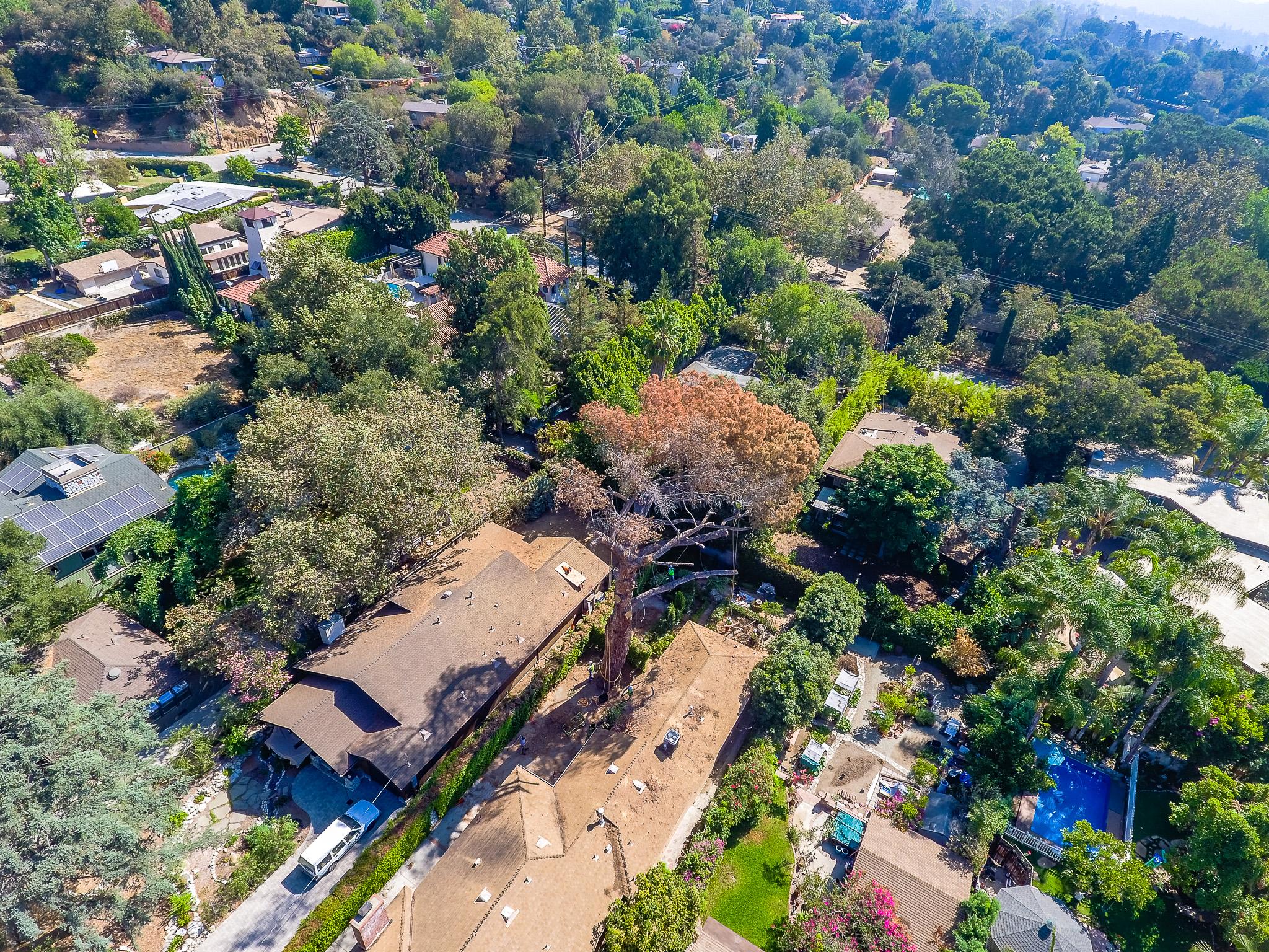 Mariposa Tree Removal Aerial 3-2.jpg