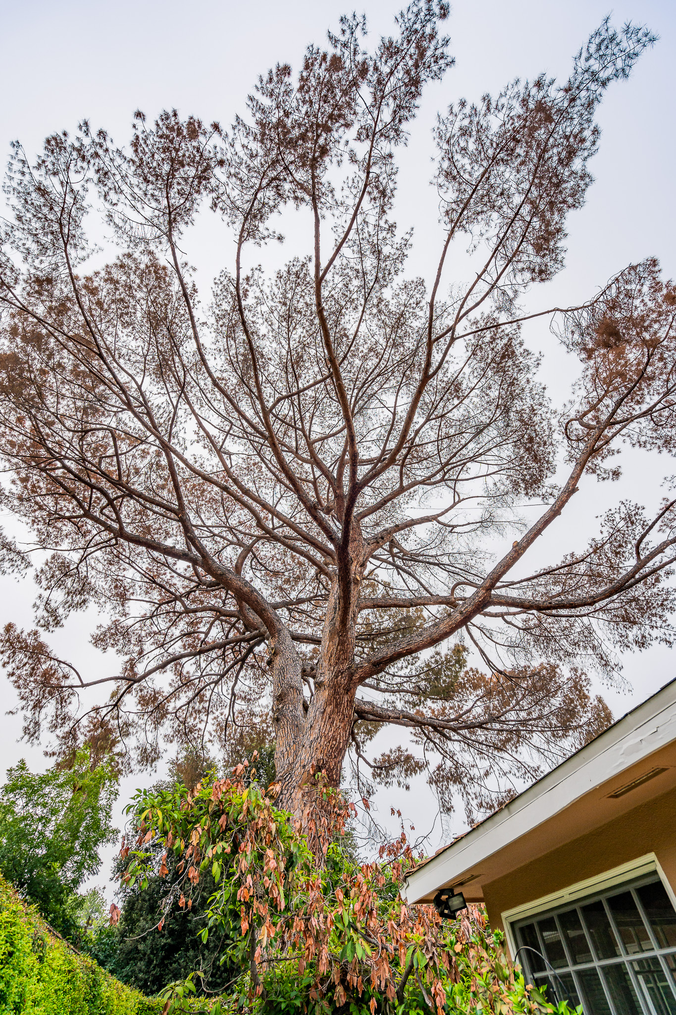 Mariposa Tree Removal Ground-2.jpg