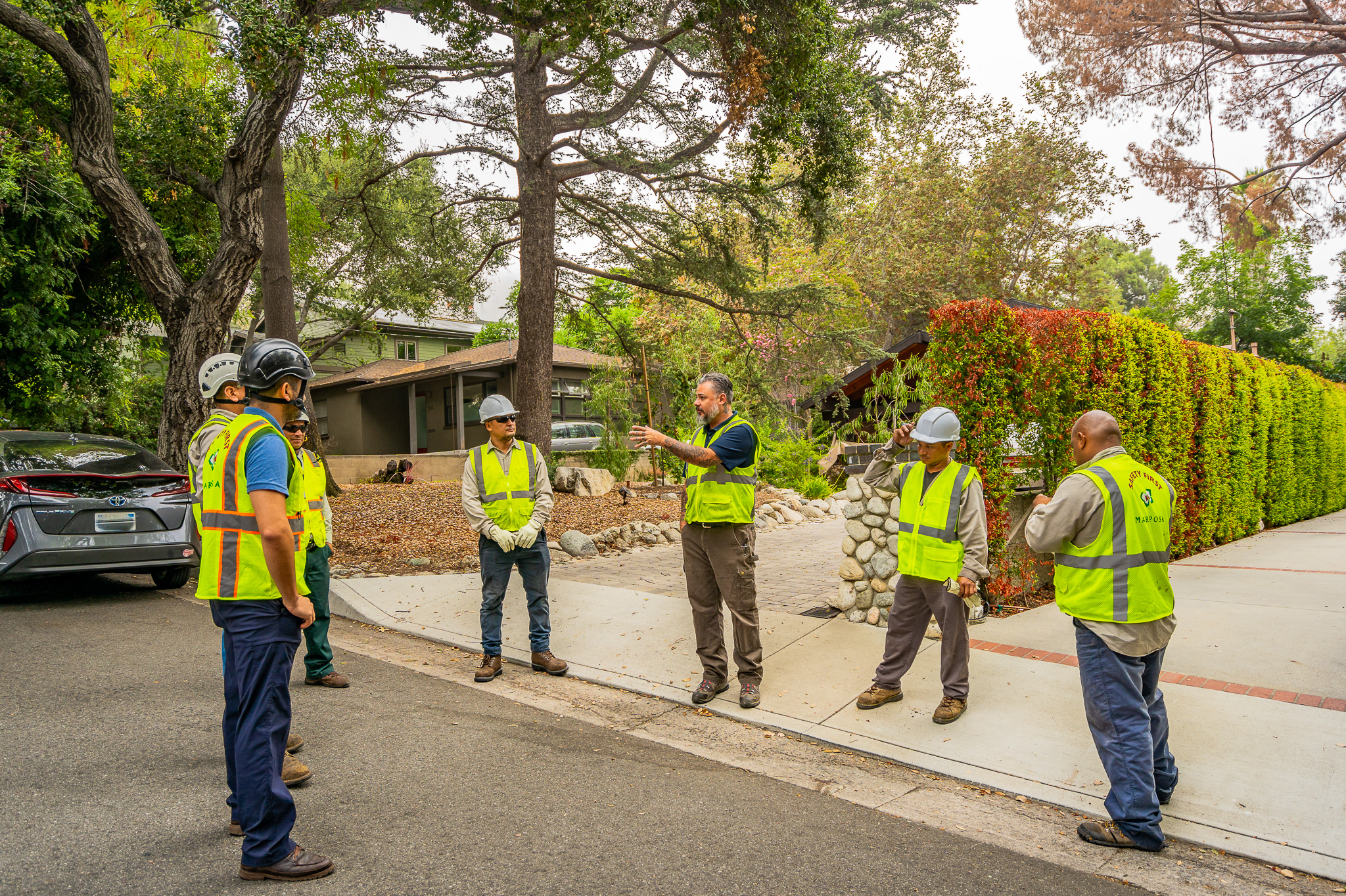 Mariposa Tree Removal Ground-8.jpg