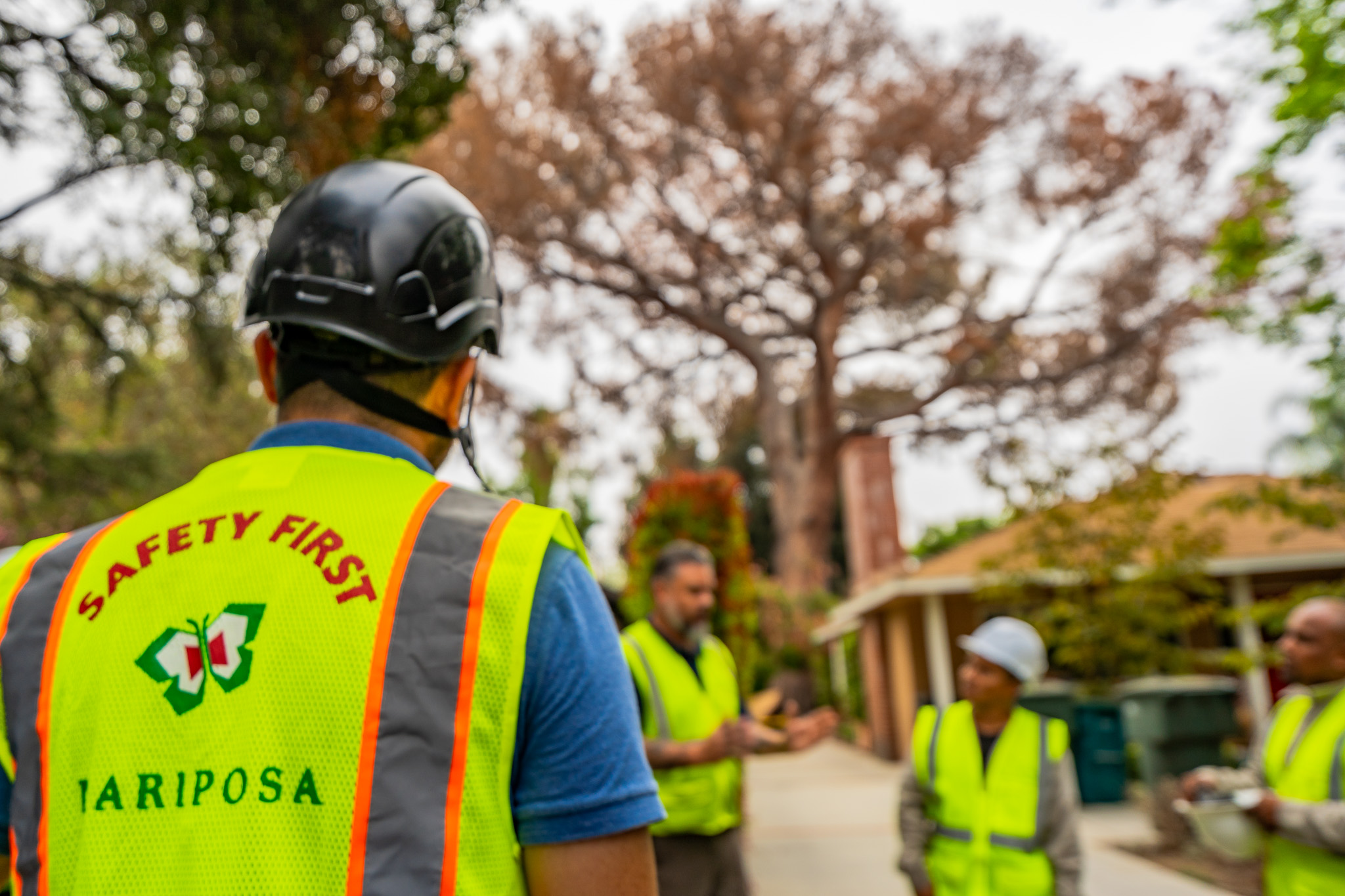 Mariposa Tree Removal Ground-12.jpg